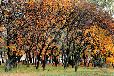 Autumn park stock photo, Autumn trees with red, orange and yellow leaves in park by Julija Sapic