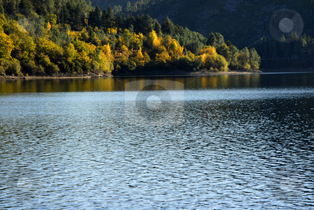 Autumn stock photo, Trees at the lake in the north of portugal by Rui Vale de Sousa