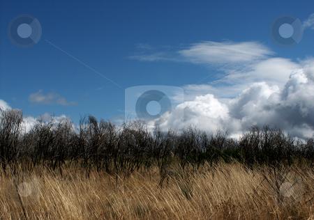 Fields stock photo, Fields vegetation by Rui Vale de Sousa