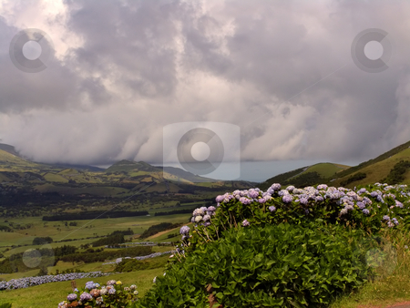 Flowers stock photo, Natural azores flowers by Rui Vale de Sousa
