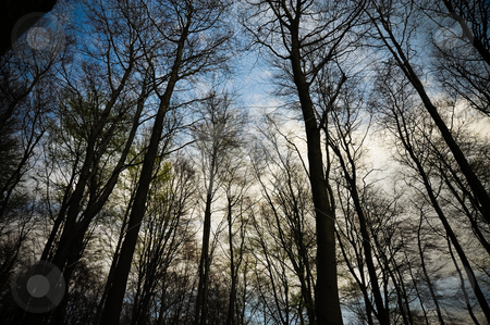 Trees and sky stock photo, Looking up at trees by Jaime Pharr