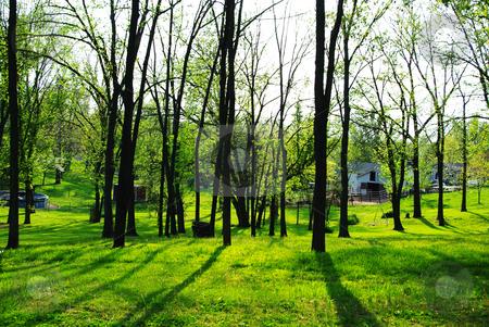 Dusk stock photo, Trees casting long shadows at dusk by Sandra Fann