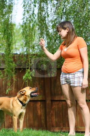 Backyard fun stock photo, A couple playing with their dogs in the backyard. by Chris Torres