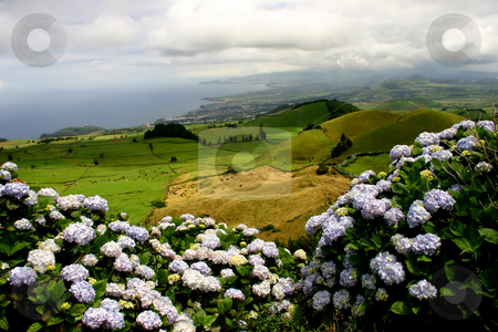 Flowers stock photo, Azores green fields in sao miguel island by Rui Vale de Sousa