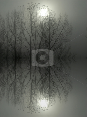 Fog stock photo, Tree branches and the sun in the smog by Rui Vale de Sousa