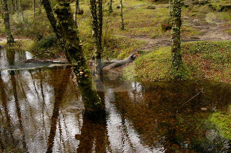 River stock photo, Forest river by Rui Vale de Sousa