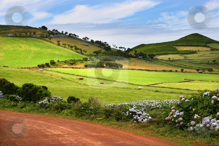 Azores stock photo, Big red road in sao jorge island, azores by Rui Vale de Sousa