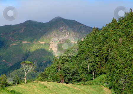 Azores mountains stock photo, Azores vegetation by Rui Vale de Sousa