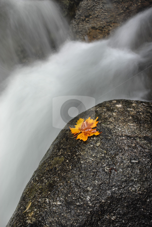 Smooth stock photo, Autumn leaf in the edge of the river by Rui Vale de Sousa