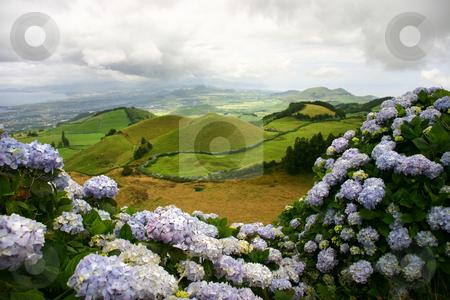 Flowers stock photo, Azores landscape by Rui Vale de Sousa