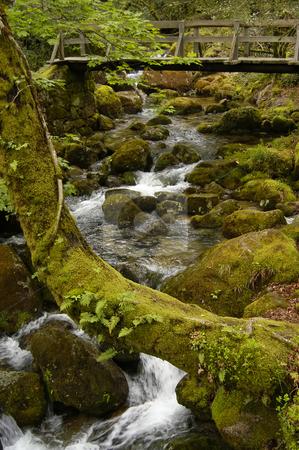 River stock photo, Small river in the north of portugal park by Rui Vale de Sousa