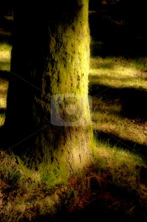 Trunk stock photo, Tree trunk by Rui Vale de Sousa