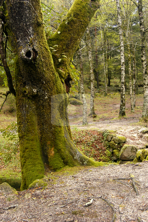 Forest stock photo, Forest trees by Rui Vale de Sousa
