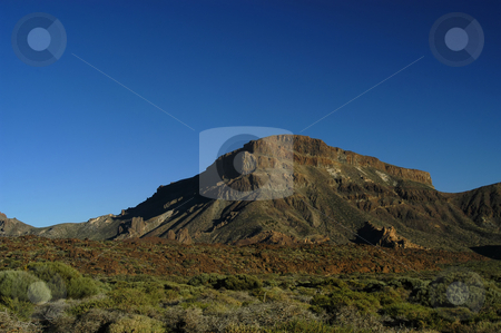 Vegetation stock photo, Tenerife top vegetation by Rui Vale de Sousa