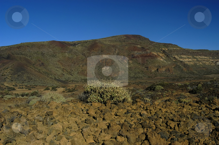 Mountains stock photo, Mountain plants by Rui Vale de Sousa