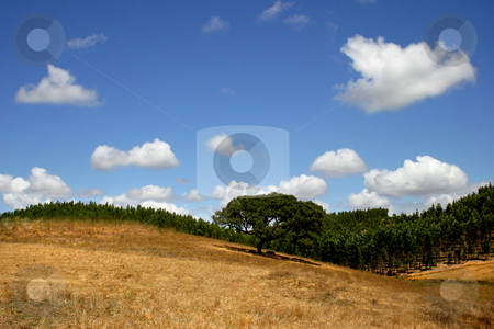 Hill stock photo, Natural south portuguese landscape by Rui Vale de Sousa