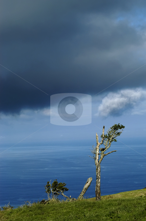 Trees stock photo, Azores coastal trees at s miguel island by Rui Vale de Sousa
