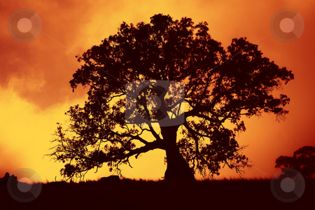 Sunrise Gum stock photo, The sun rising behing a gnarled old gum tree in a paddock in the Adelaide Hills of Austraila by Mike Dawson