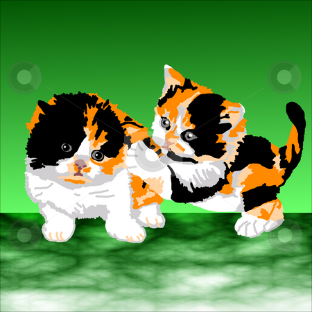 Two Persian Calico Kittens Playing stock photo, Two Persian Calico kittens playing tag on a green background. by Karen Carter