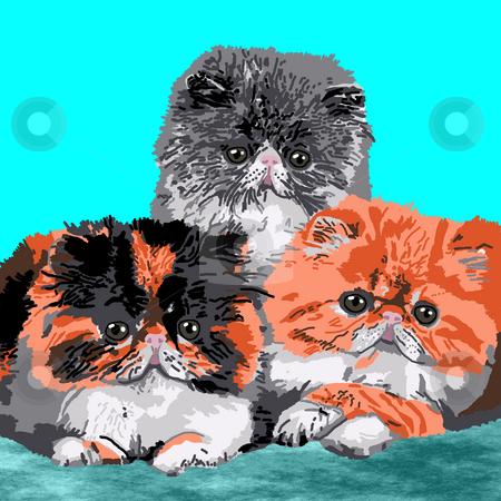 Three Persian Kittens stock photo, Three Persian kittens resting on a blue carpet. by Karen Carter