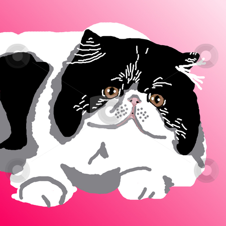 Black-and-White Persian Cat stock photo, Black-and-White Persian cat lying contentedly on a pink background. by Karen Carter