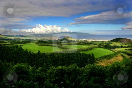 Azores stock photo, Azores vegetation by Rui Vale de Sousa