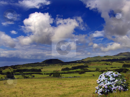 View stock photo, Azores landscape and flowers by Rui Vale de Sousa