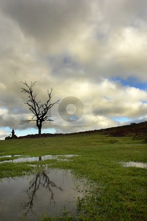 Tree stock photo, Tree in the top of the mountain and a small lake by Rui Vale de Sousa