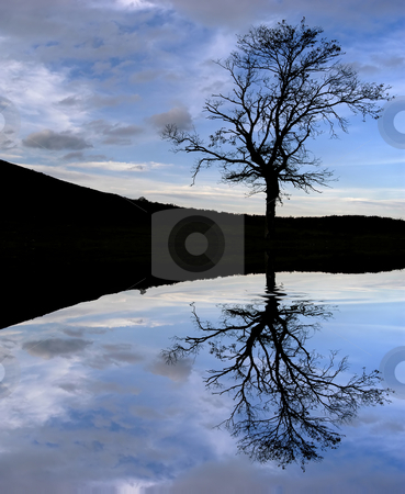 Tree stock photo, Tree in the top of the mountain, with water reflection by Rui Vale de Sousa