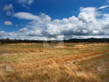 Culture stock photo, Fields vegetation by Rui Vale de Sousa