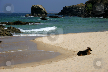 Dog stock photo, Dog in the beach by Rui Vale de Sousa