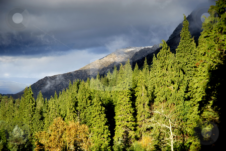 Forest stock photo, Mountain forest at the portuguese national park by Rui Vale de Sousa