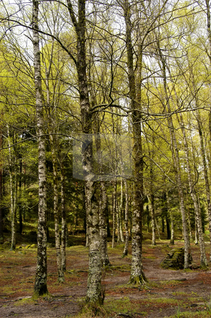 Forest stock photo, Forest trees in the portuguese national park by Rui Vale de Sousa