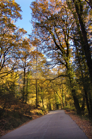 Road stock photo, Road on the forest by Rui Vale de Sousa