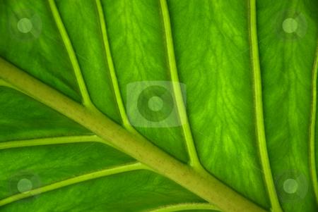 Green stock photo, Leaf detail by Rui Vale de Sousa