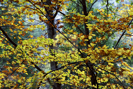 Autumn stock photo, Autumn leaves detail in the portuguese national park by Rui Vale de Sousa