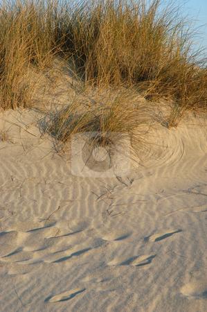 Dune stock photo, Dune vegetation by Rui Vale de Sousa
