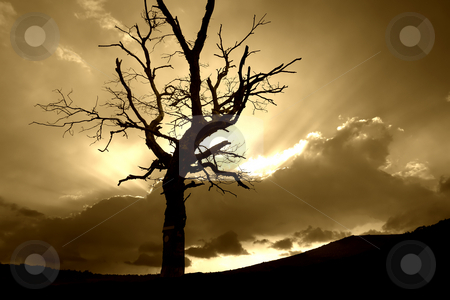 Sunset stock photo, Lonely tree at sunset in the portuguese national park by Rui Vale de Sousa