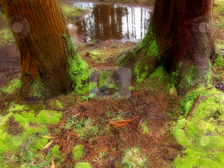 Lake stock photo, Lake in the forest by Rui Vale de Sousa