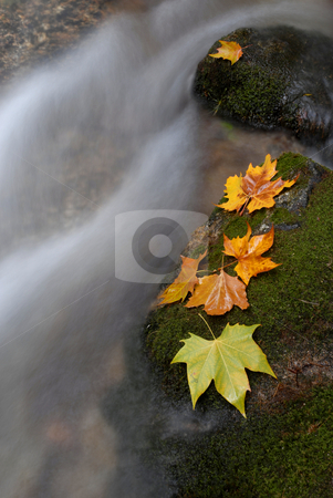 Leaves stock photo, Autumn leaves in the edge of the river by Rui Vale de Sousa