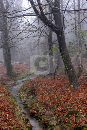 River stock photo, Small river in the portuguese national park by Rui Vale de Sousa