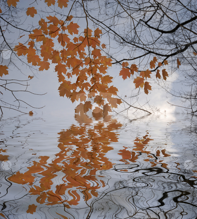 Autumn stock photo, Orange autumn leaves with digital water reflection by Rui Vale de Sousa