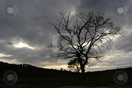 Alone stock photo, Tree in the mountains at sunset light by Rui Vale de Sousa