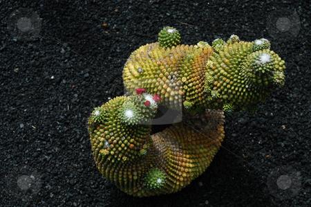 Cactus stock photo, Cactus garden by Rui Vale de Sousa