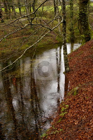 River stock photo, Forest small river in a rainny day by Rui Vale de Sousa