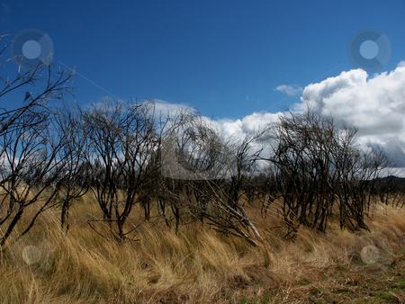 Vegetation stock photo, Fields vegetation by Rui Vale de Sousa