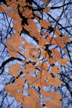 Autumn stock photo, Autumn leaves detail in the portuguese national park by Rui Vale de Sousa