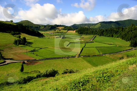 Green stock photo, Azores natural life by Rui Vale de Sousa