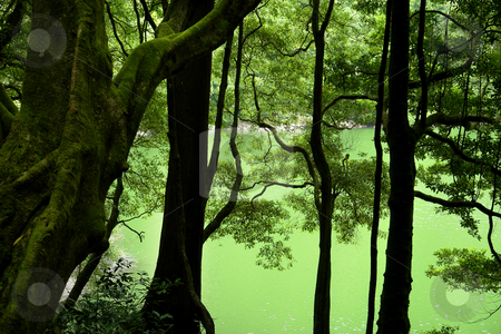 Green lake stock photo, Green lake in azores at the rain forest by Rui Vale de Sousa