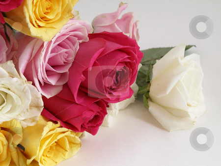 Roses for You stock photo, A beautiful bouquet of open roses laying on a white surface. by Robert Gebbie